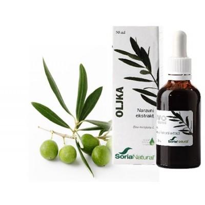 Oljka, naravni ekstrakt, 50 ml