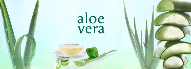 Banner-Aloe-Vera